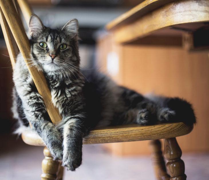 """""""Pfoten weg!"""" – Dinge, die nichts auf dem Katzenspeiseplan verloren haben."""